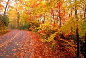 Fall_Road-793193